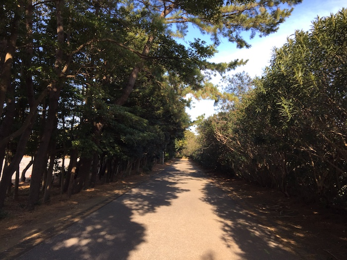 稲毛海浜公園ランニング